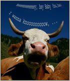 Die WIES´N Kuh ist da :-)