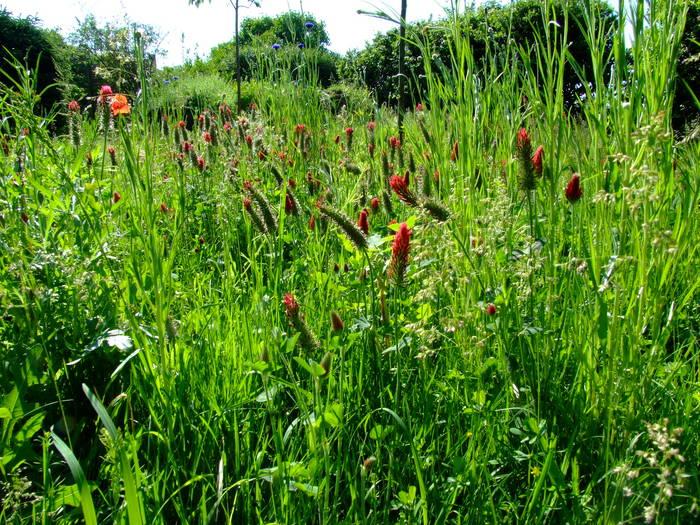 Die Wildblumenwiese.