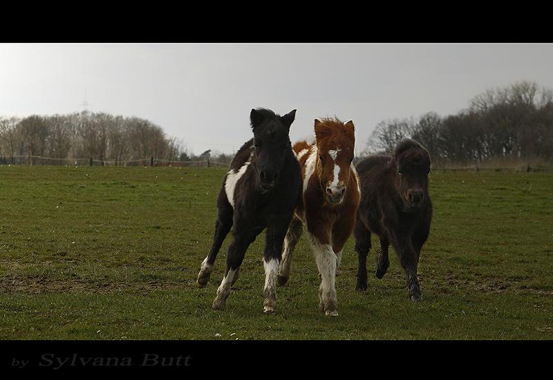 - Die wilden Drei.... -