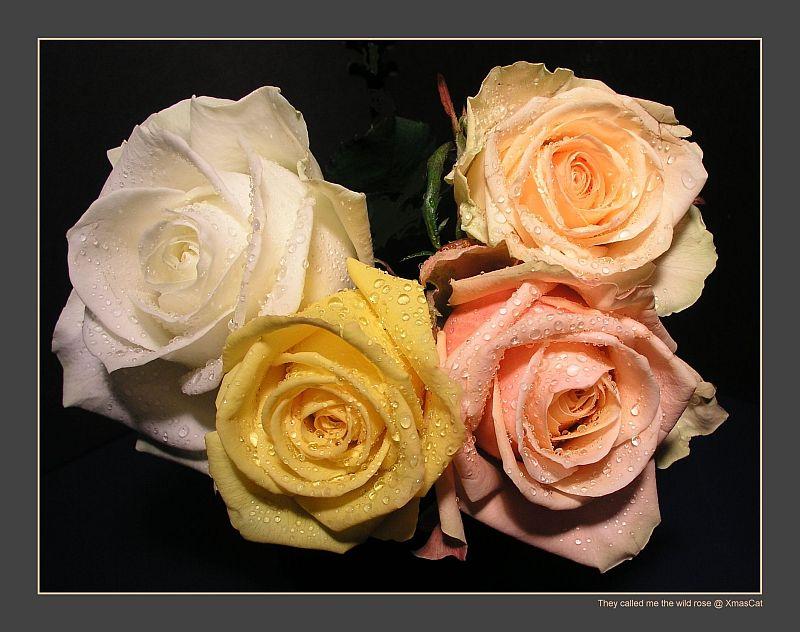 Die wilden Rosen