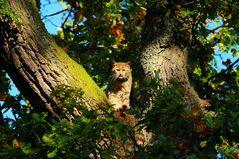 Die Wildkatze ließ mich nach unserer überraschenden Begegnung keine Sekunde aus den Augen