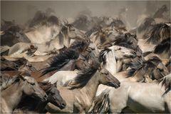« Die Wildpferde kommen »
