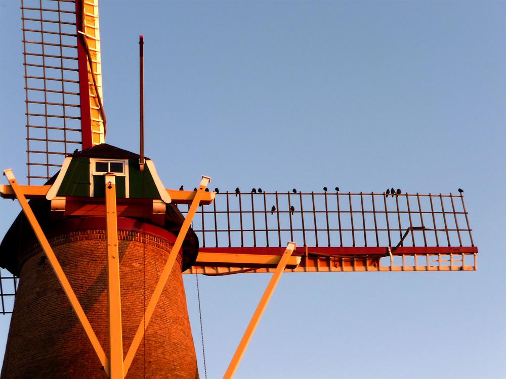 Die Windmühle von Westkapelle