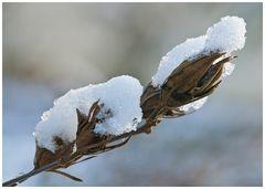 Die Winterblume