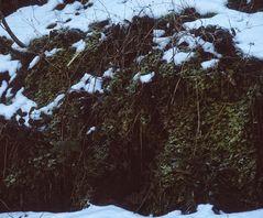 Die Winterseite im Schatten ...