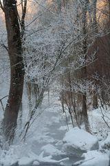 Die Wintersonne scheint durchs Geäst
