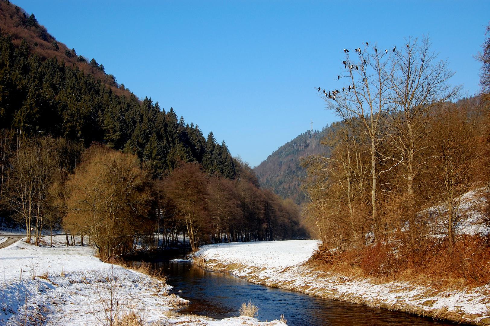 ... Die Winterversammlung der Kormorane an der Nagold ( 1-b ) ...