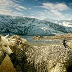 Die Wölfe im Schafspelz