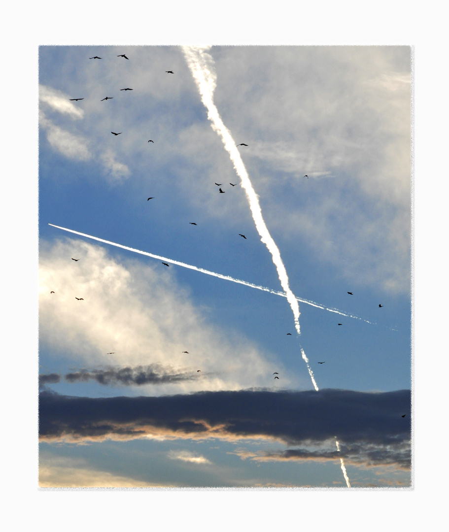 Die Wolken|Das Flugzeug|Die Vögel