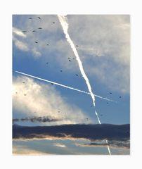 Die Wolken Das Flugzeug Die Vögel