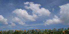 Die Wolkenschieber .....