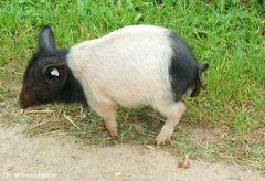 Die Würde des Schweines ist unantastbar