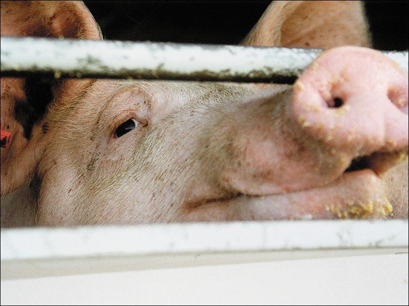 :: Die Würde des Schweins... ::