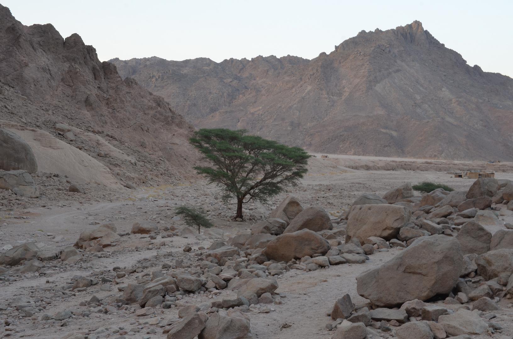 Die Wüste.