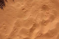 """Die Wüste lebt""..."