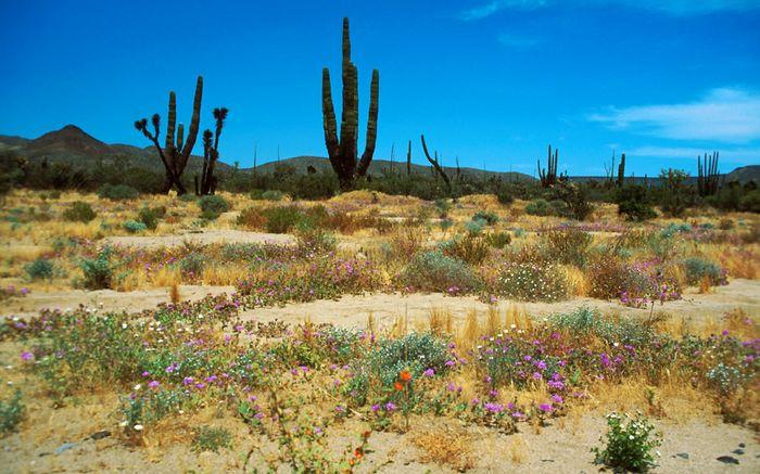 Die Wüste lebt ...