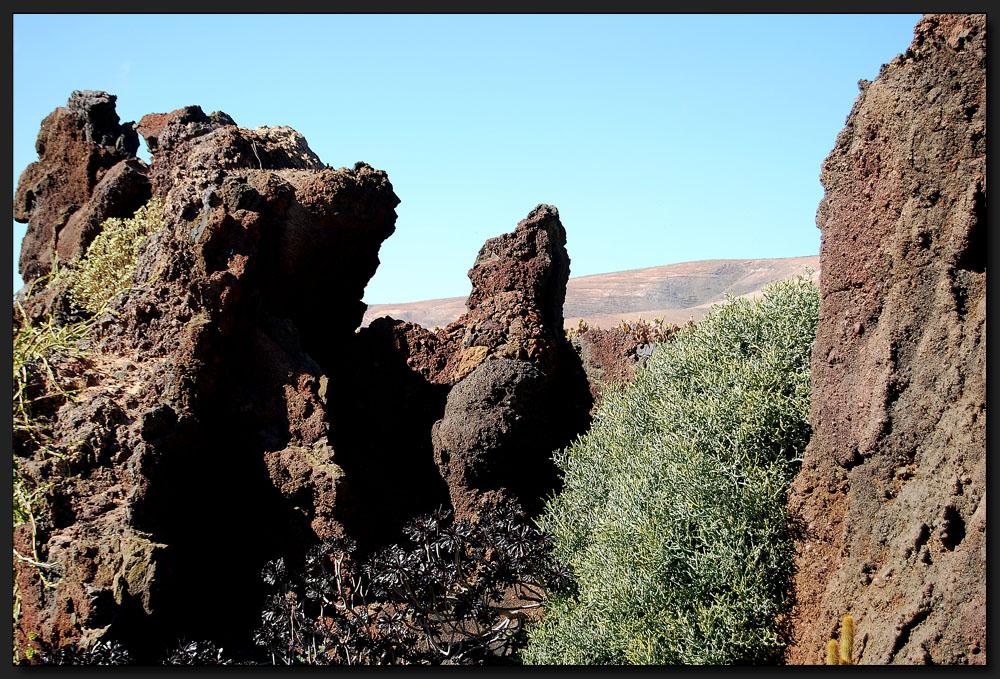 ...Die Wüste lebt...auch die Lavawüste...