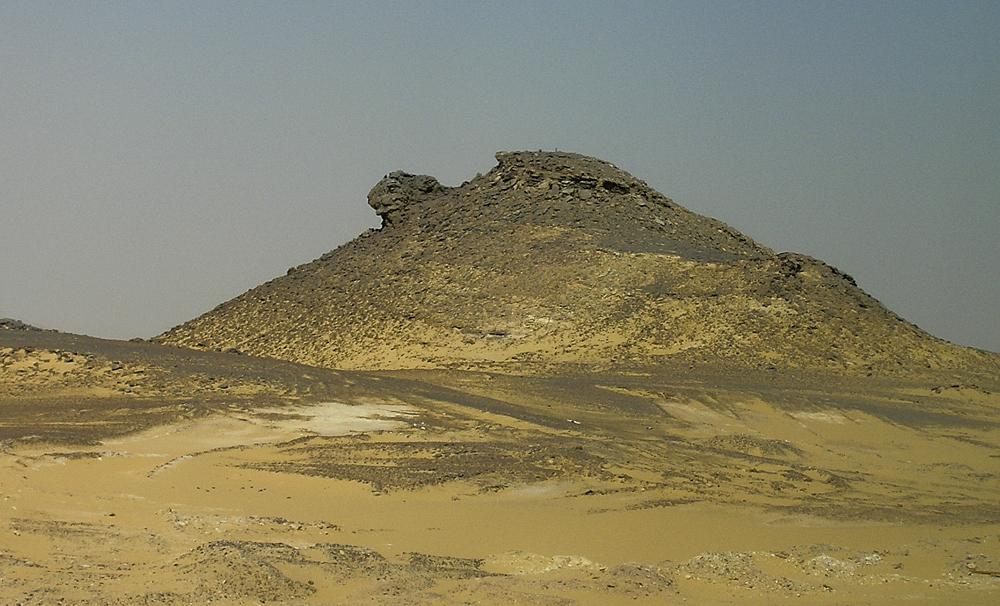 Die Wüstenschildkröte