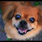 Die wunderschönsten Hundi-Augen der Welt...
