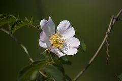 Die wundervollen Blüten...