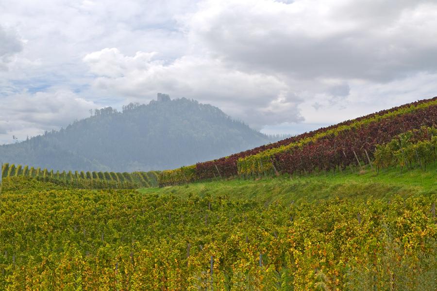Die Yburg bei Steinbach im Rebland