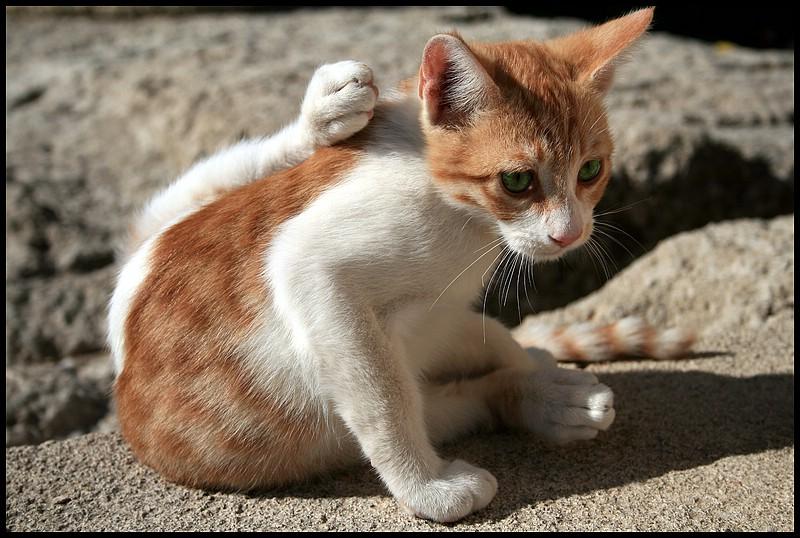 Die-Yoga-Katze