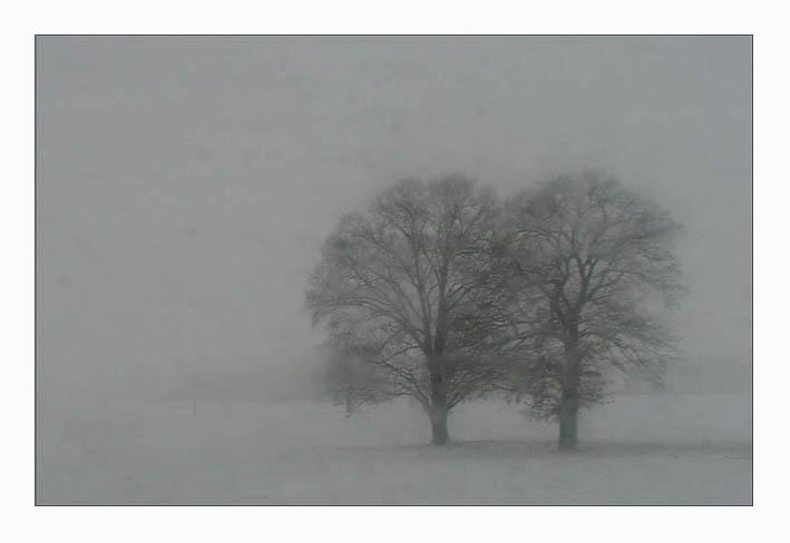 Die Zärtlichkeit der Bäume