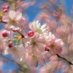 Die Zärtlichkeit des Frühlings :-)