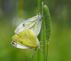 Die zarten Seiten der Natur entdecken... - Découvrir la douceur dans la nature...