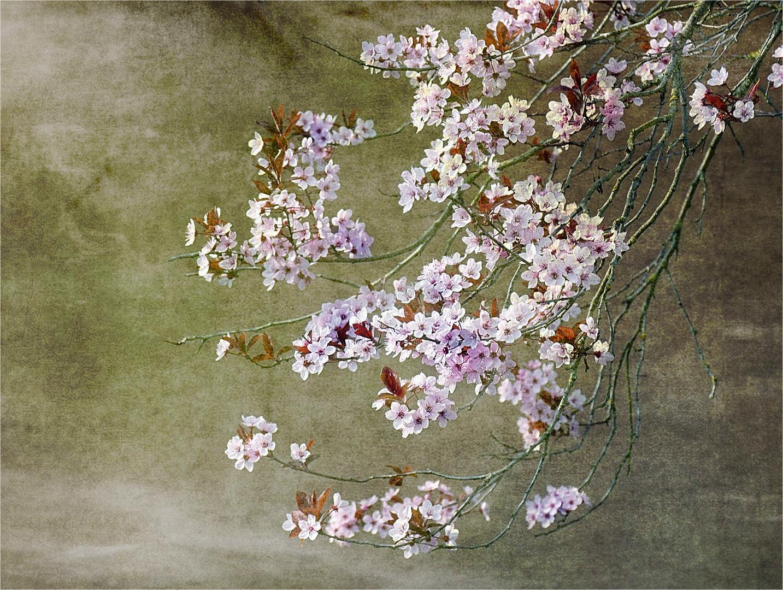 Die Zeit der Blüten...