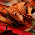 die Zeit der fallenden Blätter