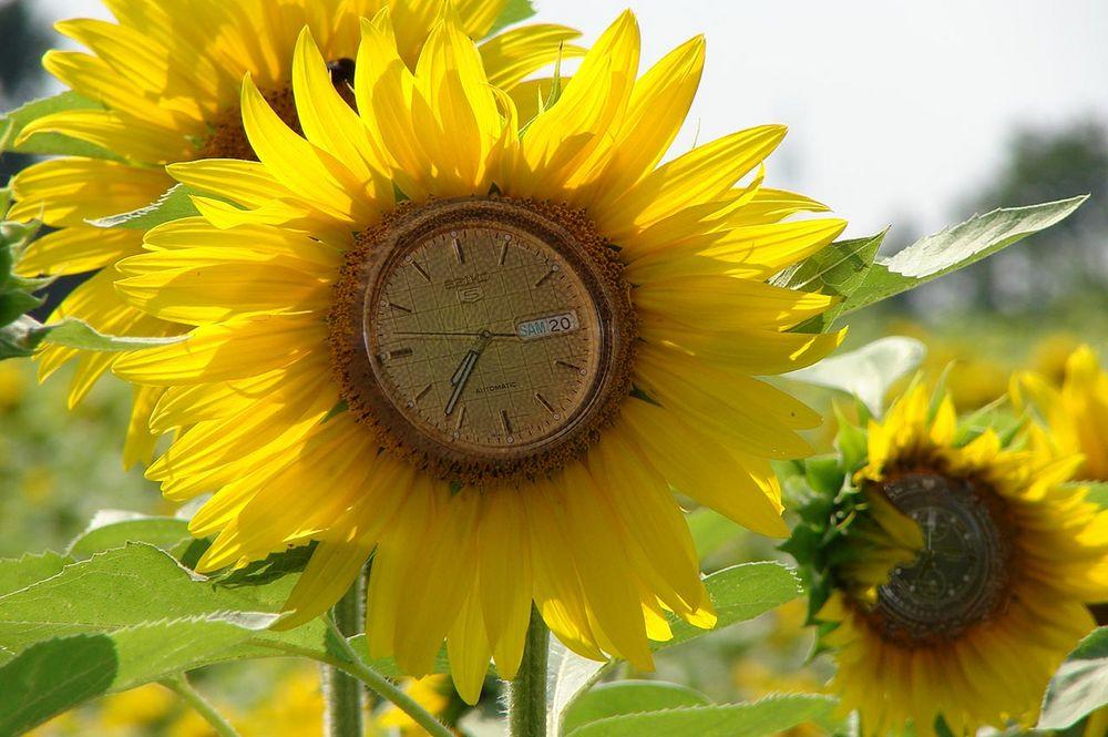Die Zeit läuft Richtung Frühling