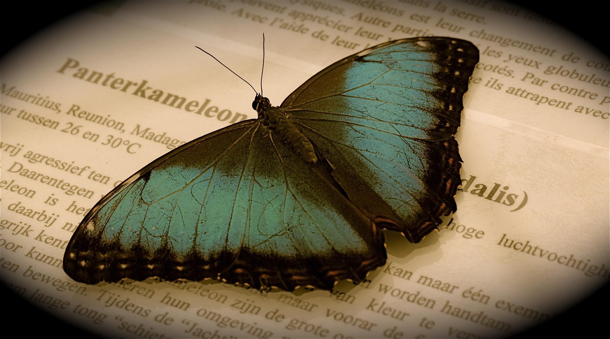 Die Zeitlosigkeit der Geschichte - ein Flügelschlag, unsere Momente