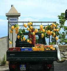 Die Zitronen der Amalfiküste