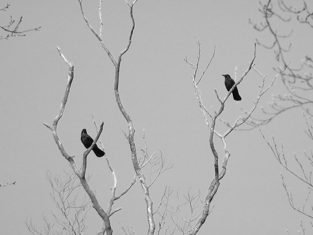 Die zwei vom Baum