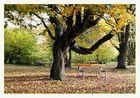 Diemelaue Warburg, im Herbst