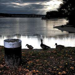 Dienstag ( Drei Enten am See )