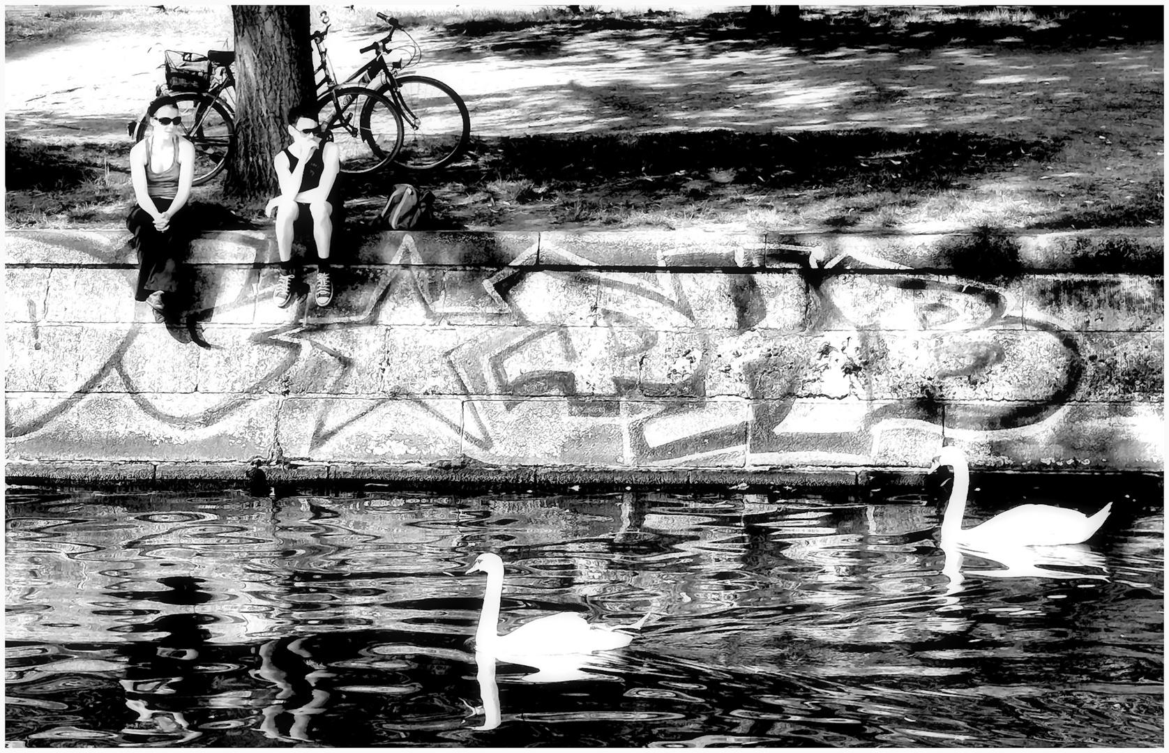 Dienstag ist Spiegeltag - Schwäne gucken in Berlin