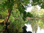 Dienstag ist Spiegeltag   --   Teich