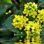 Dienstag-Spiegeltag - gelbe Blüten
