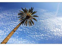 die:::palme