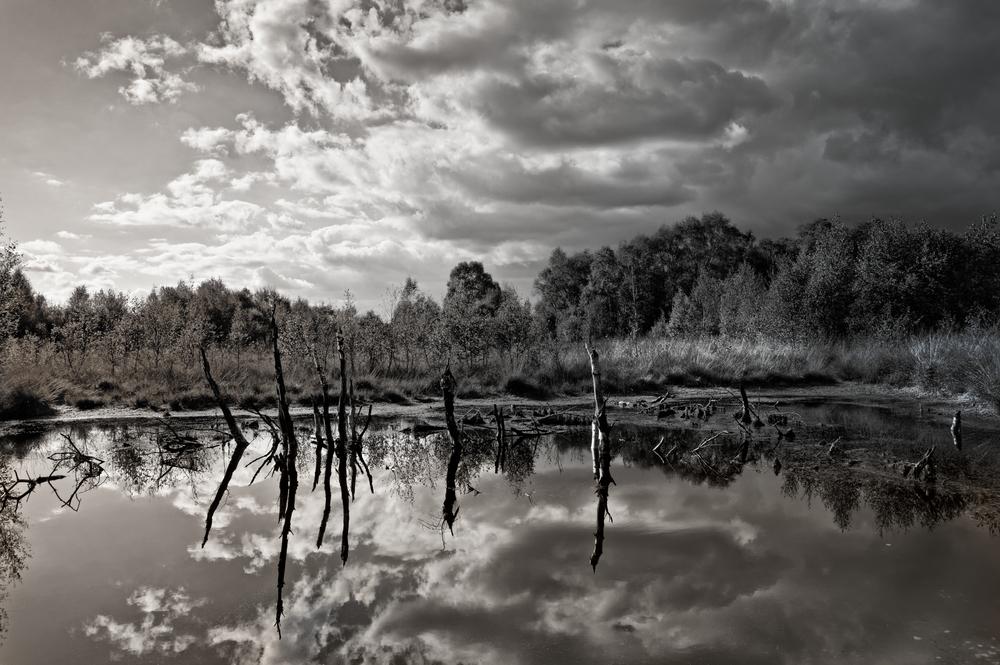 Diepholzer Moor