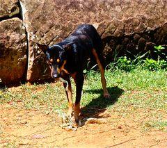 dies arme tier war wirklich ausgehungert, plastik ist wahrscheinlich der letzte ausweg, cambodia 201