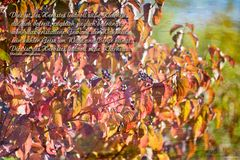 Dies ist des Herbstes leidvoll süße Klarheit