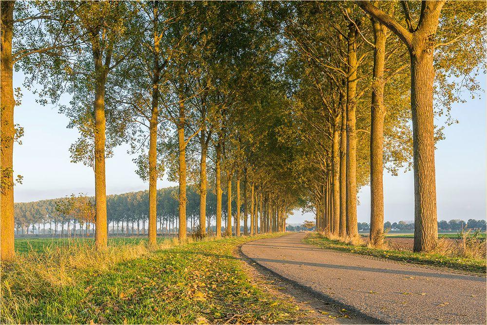 Diese Baumreihen - typisch flämisch!