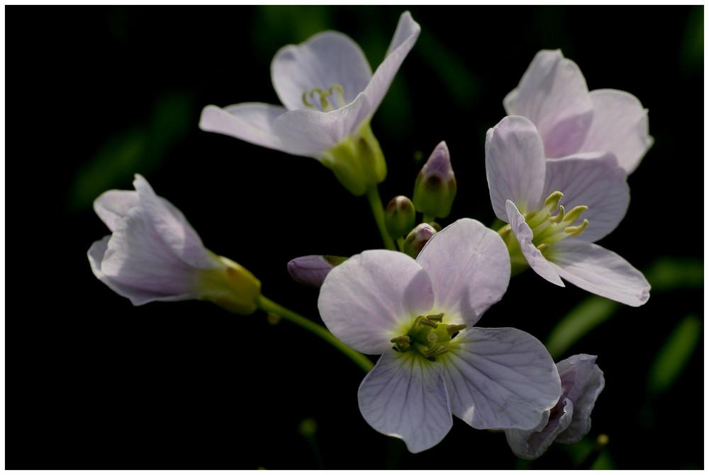 Diese kleinen zarten Blüten