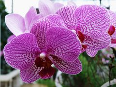 """Diese Orchidee machte """"eine besonders gute Figur"""""""