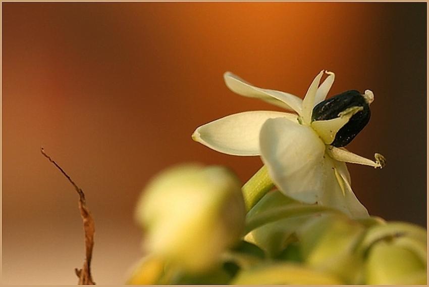 diese schöne Blüte
