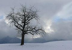 Diese Winterbäume liebe ich