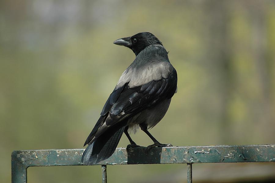 Diese Woche hab ich mal nen Vogel ;-)